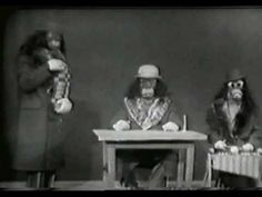"""An earlier version of the immortal Nairobi Trio - from Ernie Kovacs' 1957 NBC special """"The Silent Show"""" Ernie Kovacs, Stand Up Comics, Parody Songs, Tv Westerns, Internet Memes, Old Tv Shows, Nairobi, Classic Tv, Great Movies"""