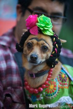 My Favorite Halloween Costume   The Mark Rogers Pet Photography Blog