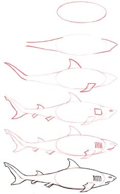 Girl Scout Wonder of Water Journey - Team Shark. How to Draw a Shark.
