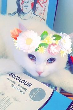 This wide-eyed beauty: | 22 Animals That Look Way Better With The New Snapchat Filters