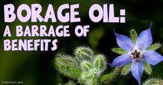 Borage oil, known for treating inflammation and relieving pain, has many other benefits – discover the many uses of this essential oil. http://articles.mercola.com/herbal-oils/borage-oil.aspx