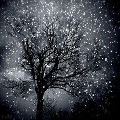Glistening star trees