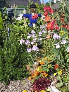 Scarecrow Garden