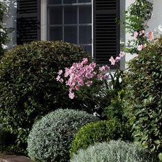 Herbaceous Perennials, Formal Gardens, Life Design, Whimsical, Balls, Plants, Inspiration, Instagram, Biblical Inspiration