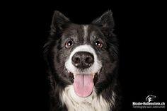 #dog #hund #cutedog