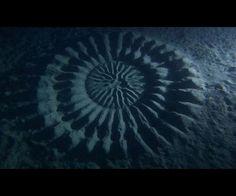 Des crop circles sous-marinYoji Ookata, plongeur photographe japonais, fréquente les eaux depuis plus de 50 ans, et pourtant, c'était la première fois qu'il tombait sur ce phénomène : un crop circle de 2 mètres de diamètre à plus de 24 mètres de profondeur sur les côtes japonaises.