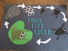 Frog Life Cycle with googly eyes and bubble wrap Frog Crafts, Preschool Crafts, Science Fair Projects, School Projects, Frog Bulletin Boards, Frog Activities, Nursery Activities, Frog Habitat, Life Cycle Craft