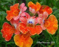 Spring Flowers V by *BreeSpawn on deviantART