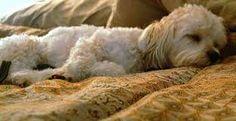 Image result for let sleeping dogs lie