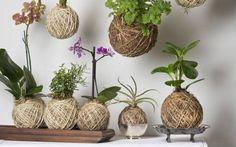 L'art du KOKEDAMA traduit littéralement par «koke» signifiant mousse et «dama» signifiant boule. Cette boule de mousse. Cette boule de mousse japonaise peut faire un très beau cadeau personnalisé ou tout simplement une décoration...