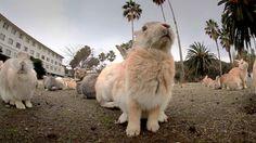 Rabbit Island - Nature's Weirdest Events: Series 4 Episode 2 Preview - B...