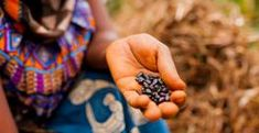 60% of arable land is in Africa and it has billions in investment potential | Grow Africa African Development Bank, Adobe, Flock Of Birds, Fabric Wall Art, Black Beans, Wall Canvas, Close Up, Wall Murals, Hold On
