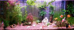 Quelles Plantes avec le poisson rouge ?