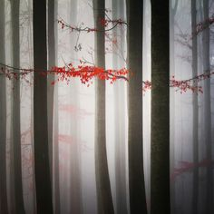 Photograph Misty Forest by Carsten Meyerdierks on 500px