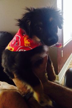 Cash 16 weeks showing off his Chiefs bandana