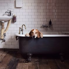 If dogs ruled the world no one would ever have to take a bath