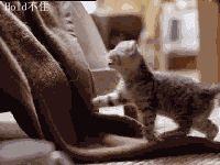Quem nao quer um gatinho desses?