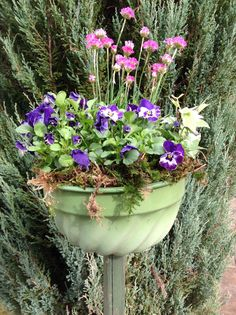 Gugl am Stiel Plants, Flora, Plant, Planting