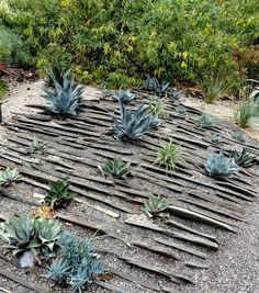 Dry Garden, Gravel Garden, Garden Stones, Water Garden, Gravel Landscaping, Landscaping With Rocks, Drought Tolerant Garden, Alpine Garden, Home Garden Design