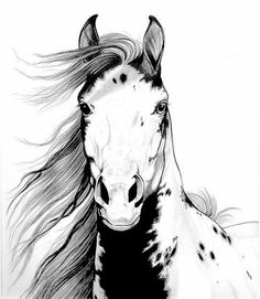 Mustang Horse Sketch | Mustang I Called Geronimo Drawing by Cheryl Poland - A Wild Mustang ...