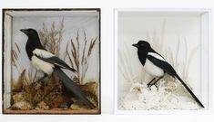 Memorial. A Tribute to Taxidermy - Upcoming Exhibitions - Visit - Horniman Museum and Gardens