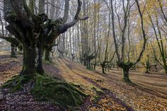 Morning trees by veladofoto. Please Like http://fb.me/go4photos and Follow @go4fotos Thank You. :-)
