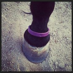 Custom Leather Emergency Contact Band for Horses by StormbornEquine, $19.95