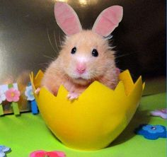 21 Animals Dressed Up for Easter - lol!
