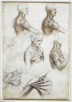 Leonardo Da Vinci Exhibition Shows Extraordinary Accuracy Of Anatomical Sketches. One of the dissected corpses of Da Vinci was a man 100 years old. Anatomy Study, Anatomy Reference, Art Reference, Michelangelo, Muscles Of The Neck, Bones And Muscles, Anatomy Sketches, Anatomy Drawing, Human Anatomy Art