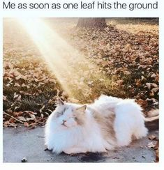20 Cute and Funny Animal Fall Pictures You'll Love More than PSL #fallmemes #cutememe #cuteanimals #funnyanimals #animalmemes Funny School Pictures, Funny Animal Pictures, Funny Images, Funny Animals, Cute Animals, Super Funny, Really Funny, The Funny, Yoda Funny