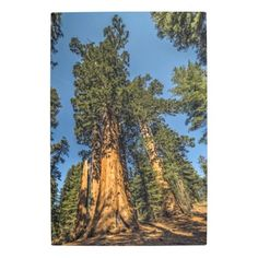 Majestic Redwood Trees Metal Print - photographer gifts business diy cyo personalize unique