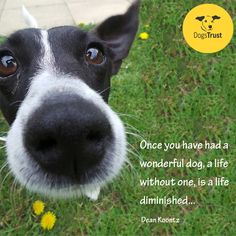 """Once you have had a wonderful dog, a life without one, is a life diminished..."" Dogs Trust, Dog Quotes, Quotes, Cute, Animals, Rescue Dogs, Rehoming, Pet, unconditional, Famous Words, Charity"