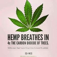 hemp breathes in more carbon dioxide than trees
