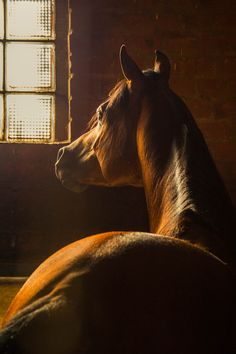 (Light and Form) Arab Horse by Flavia Canepa