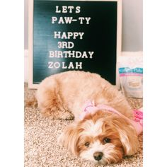 "Obtain great suggestions on ""Shih Tzus Puppies"". They are on call for you on our web site. Dog Birthday Quotes, Dog First Birthday, Birthday Captions, Puppy Birthday, Birthday Messages, Diy Letter Board, Puppy Litter, Shih Poo, Birthday Letters"