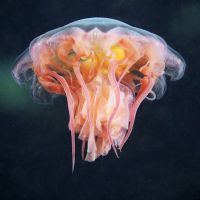 Alexander Semenov// Jellyfish Photography