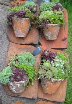 alte dachziegel als gartendeko nutzen gardens succulent. Black Bedroom Furniture Sets. Home Design Ideas