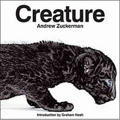 With his signature style of crisp yet tender portraits, Zuckerman captures the spirit of Earth's diverse creatures, from panthers to fruit bats to bald eagles, making them appear familiar and fresh at the same time, and altogether breathtaking.