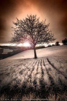 Tree of Creams by Lara Zanarini on 500px