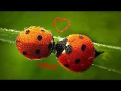 Lovely Ladybugs - Squee daily at these cute animals and the absolute cutest animal pics and gifs ever known to man. Lady Bug, Animals And Pets, Cute Animals, A Bug's Life, Love Wallpaper, Love Bugs, Black Spot, Beautiful World, Beautiful Ladies