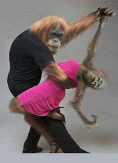These 13 animals have got some serious dance skills. Check out the GIFs below of 13 hilarious animals moving, grooving, and being adorable. Baby Animals, Funny Animals, Cute Animals, Photos Singe, Funny Monkey Pictures, Tierischer Humor, Dancing Animals, Tier Fotos, Make You Smile