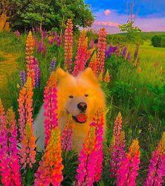 Dog Wallpaper, Cute Wallpaper Backgrounds, Animal Wallpaper, Cute Wallpapers, Cute Little Baby, Cute Little Animals, Animals For Kids, Cute Animal Photos, Cute Animal Drawings