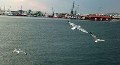 Gulls at Thessaloniki Port
