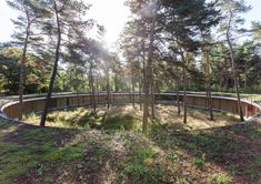 """Hostel Wadi / Studio Bernardo Secchi & Paola Viganò. Kasterlee, Belgium. The O-shaped """"Hostel Wadi"""" encircles part of the pine forest, retained as a memento of a disappearing artificial landscape that is rapidly transforming into  broadleaf vegetation."""