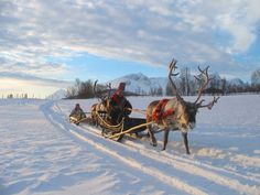 Reindeer sledding. Tromso, Norway.  (All Rights Reserved).