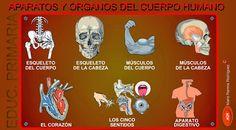 http://lacasetaespecial.blogspot.com.es/2013/10/el-cos-huma.html  La CASETA, un lloc especial: El cos humà