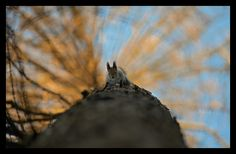 quirrel on the tree