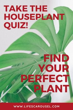 Not sure which type of houseplant to get? Take this houseplant quiz to find your PERFECT match! Answer these easy questions to find the right plant for you! Modern Hipster, Hipster Rooms, Lp Storage, Record Storage, Your Perfect, Perfect Match, Growing Vegetables Indoors, Types Of Houseplants, Easy Plants To Grow