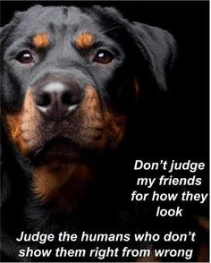 """Receive terrific ideas on """"rottweiler puppies"""". They are actually accessible for you on our site. Big Dogs, I Love Dogs, Cute Dogs, Dogs And Puppies, Doggies, Funny Dogs, Rottweiler Puppies, Rottweiler Quotes, German Dogs"""