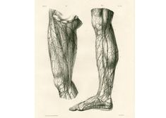 1836 Artères sous-cutanées de la cuisse. Jambes Homme Adulte. Ancienne Planche Anatomique Corps Humain Bourgery Poster Anatomie Medecine Human Anatomy Art, Animal Anatomy, Leg Anatomy, Chef D Oeuvre, Hand Coloring, Human Body, Les Oeuvres, Thighs, Legs